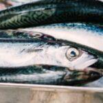 basque cantabrian anchovy