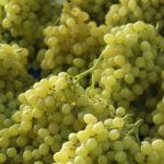 txakoli-grapes